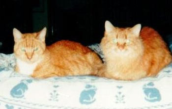 Maggie & Cinnamon